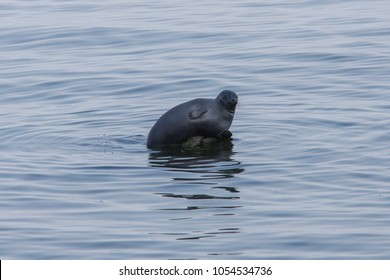 Baikal seal on the rock. Lake Baikal.