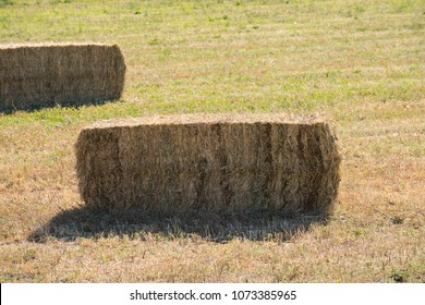 Bailed hay, animal feed drying under the sun