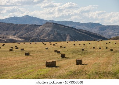 Bailed hay drying on ranch land, Painted Hills region of Oregon, USA.