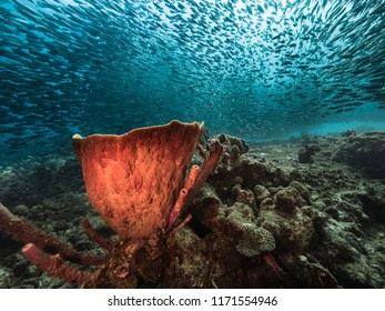 Bait ball at the coral reef in the Caribbean Sea at scuba dive around Curacao /Netherlands Antilles with big sponge in foreground