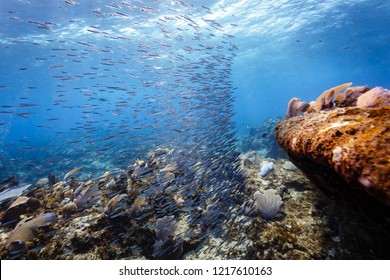 Bait ball of small silver fish make turn at edge of cliff on coral reef