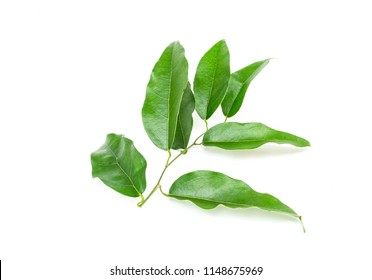 Bai-ya-nang (Thai name) (Tiliacora triandra) isolated on white background. Thai herb