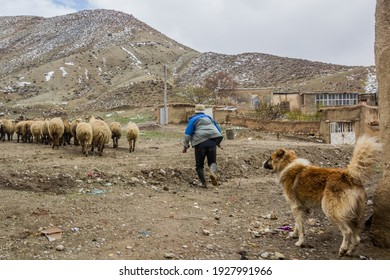 BAJGIRAN, IRAN - APRIL 17, 2018: Sheep herding in Bajgiran village, Iran