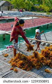 Bajo Tribe of Wakatobi: seaweed farmer lady with her daughter, working on the platform above the sea, Southeast Sulawesi, Indonesia, 2011