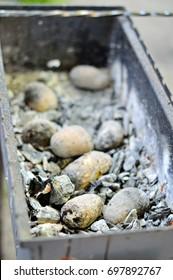 Baked potatoes on coals