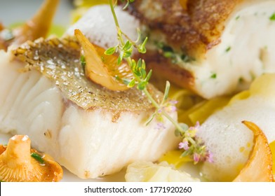 Baked zander fillet on a plate. Delicious fish meal - walleye fillet with mushrooms and served with tagliatelle. Studio shot