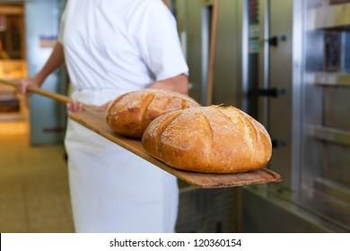 baker baking fresh bread in the bakery showing it on the shovel