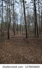 Baker's Pond Trail in Holly Springs National Forest Mississippi