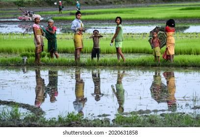Baksa, Assam, India. 10 July 2021. Women farmer planting rice saplings at a paddy field in Baghmara village in Baksa district of Assam.