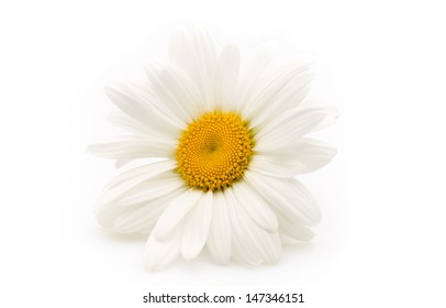 Balanced spa stones with camomile flower and white  background.