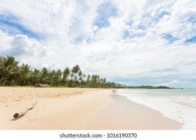 Balapitiya, Sri Lanka, Asia - A wooden branch at the beach of Balapitiya