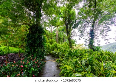 Balata Garden, Martinique - Paradise botanic garden on tropical caribbean island with suspension bridges - France