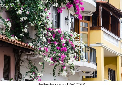 Balconies with bougainvillea in Casco Viejo