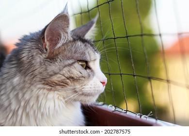 Balcony Cat!