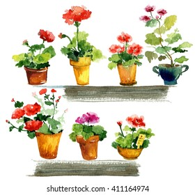 Balcony flowers. Geraniums in the window. Geranium, watercolor illustration. Garden isolated set with hand drawn potted flowers.