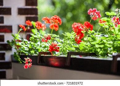 Balcony flowers, small garden with blossom of geranium