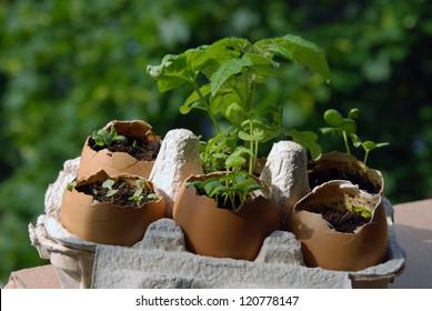Balcony gardening in eggshells
