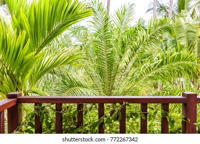 Balcony of the house with view of the tropical forest. Concept of travel and idyllic relax in tropics. Green background of palm trees. Hotel room overlooking the nature.