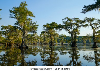 Bald cypress trees with reflection at Caddo Lake near Uncertain, Texas