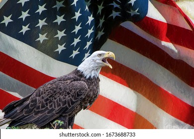 Bald Eagle with American Flag in Background