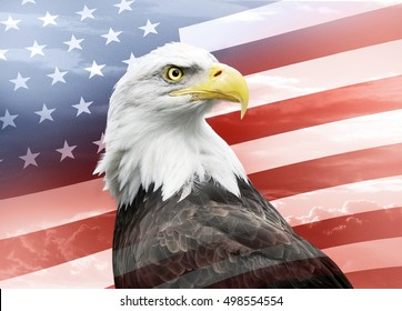 bald eagle with american flag behind