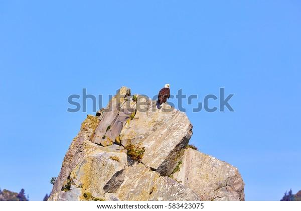 Bald Eagle, coast and sea near Seward, Alaska, USA