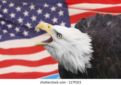 Bald eagle composite