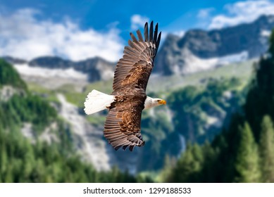 A bald eagle flies at high altitude in the sky and seeks prey. There are clouds in the sky but there is a clear view in the bright sun.