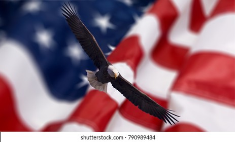 Bald Eagle in flight with American Flag in background