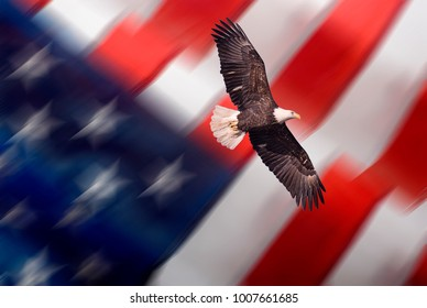 Bald eagle flying with blurred American flag background