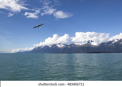 Bald eagle flying over the waters of the Lynn Canal in Southeast Alaska on a sunny day.