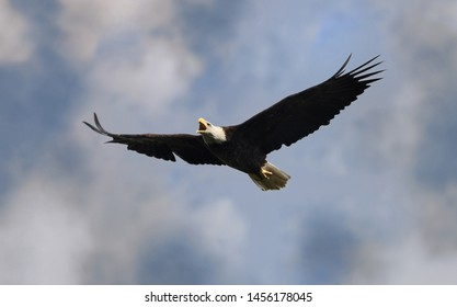 Fly Eagles Images, Stock Photos & Vectors | Shutterstock