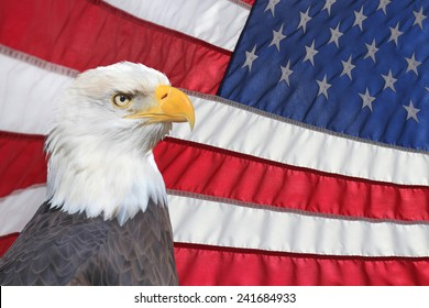 A Bald Eagle In Front of an American Flag Waving in the Breeze