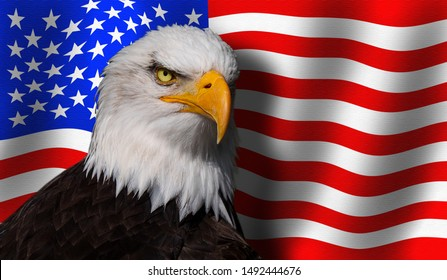 Bald eagle front the flag of the USA.