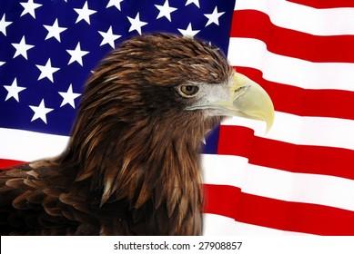 Bald Eagle in guarding American Flag