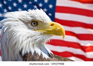 Bald eagle head, american flag