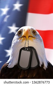 Bald Eagle holds a dog tags in his beak, at the background American flag.Memorial or Veterans Day Concept.