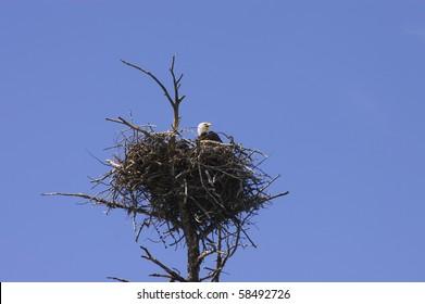 Eagles Nest Images Stock Photos Vectors Shutterstock
