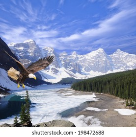 Bald eagle on Moraine lake background. Banff National park. Canada.