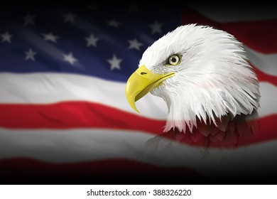 Bald Eagle on US flag illustration