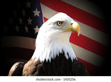 Bald eagle over flag