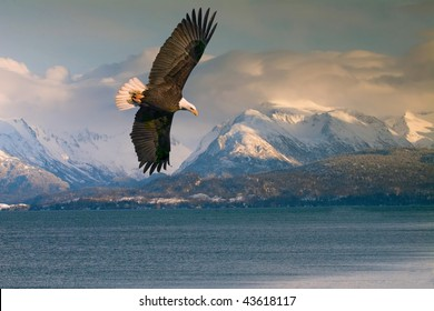 bald eagle over homer alaska harbor