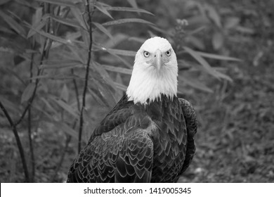 bald eagle running around me