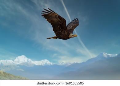Bald Eagle soaring over the mountains