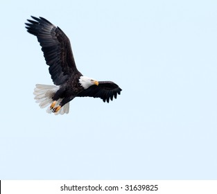 A bald eagle soars through a blue sky on a winter day along the Mississippi River