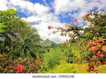 Bald Mountain Volcano, Martinique, Caribbean. Lush vegetation in foreground