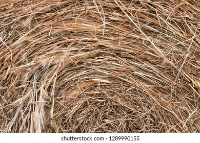 Bale of Hay close up - Background