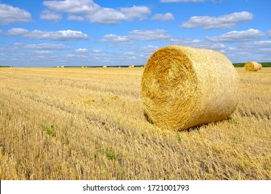 a bale of hay in the field after harvesting straw. preparation for the winter
