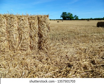 bale of hay in newly mown field  at harvest time in south northamptonshire farm land, England with tree in distance