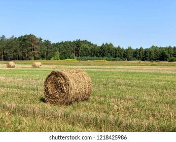 Bale of hay on a field during a harvest in Poland.